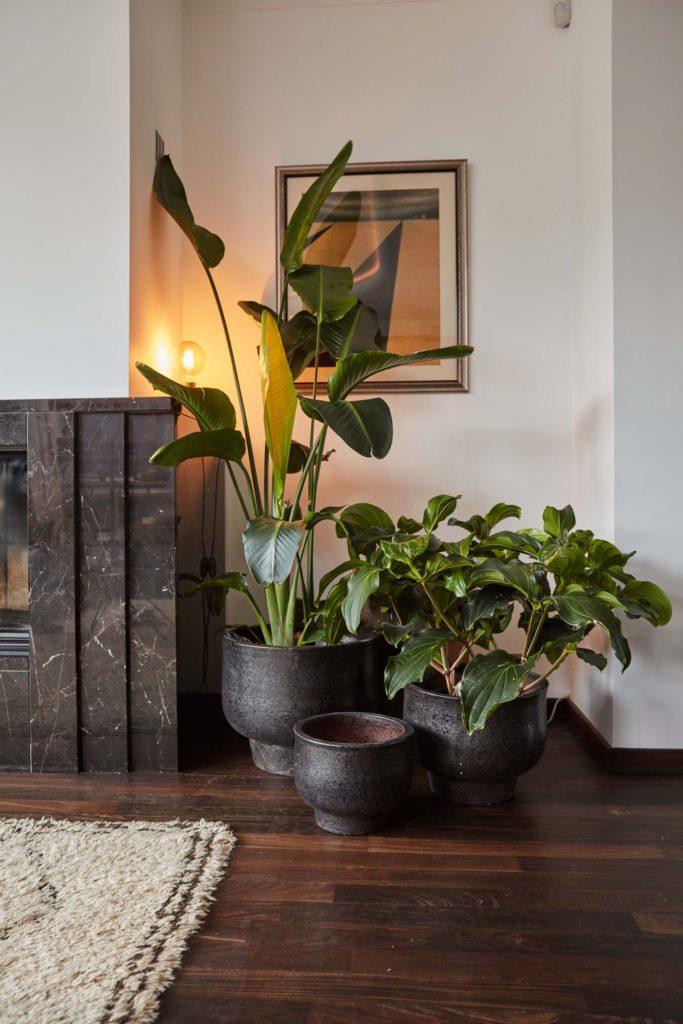 Florenza-Kontich-Ekeren-Schilde-bloemen-en-planten-decoratie-interieurinrichting-DM-kamerplant-1