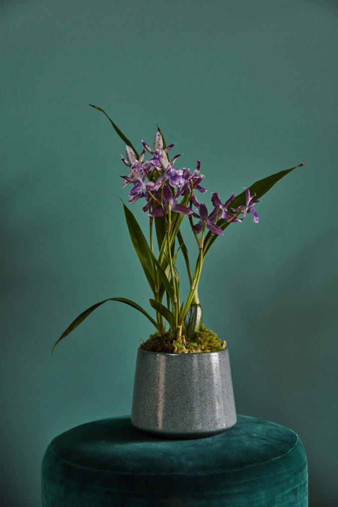 Florenza-Kontich-Ekeren-Schilde-bloemen-en-planten-decoratie-interieurinrichting-DM-pot-5
