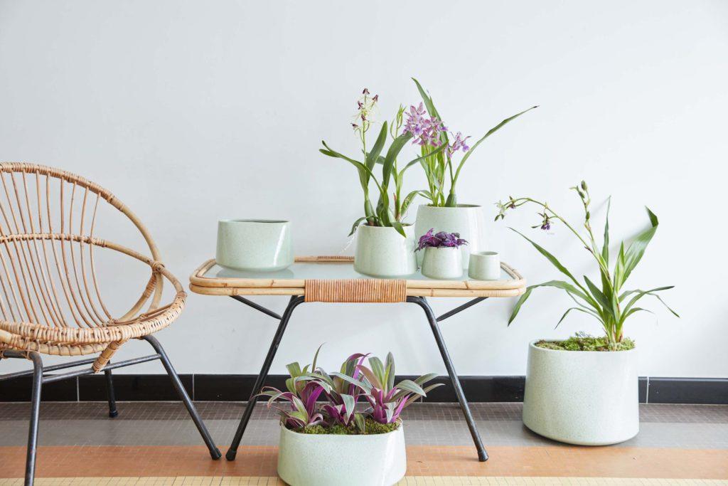 Florenza-Kontich-Ekeren-Schilde-bloemen-en-planten-decoratie-interieurinrichting-DM-pot-6